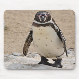 Humboldt Penguin Mouse Pad