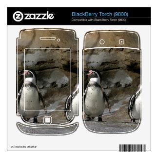 Humboldt Penguin Skin For BlackBerry