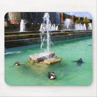 Humboldt penguins and fountains mouse mat