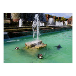 Humboldt penguins and fountains poster