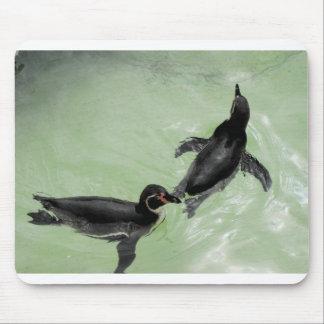 Humboldt penguins mouse pad