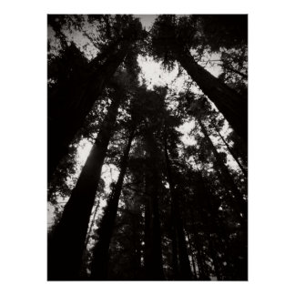 Humboldt Redwoods State Park- Black and White Poster