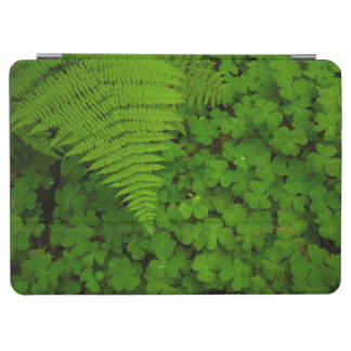 Humboldt Redwoods State Park iPad Air Cover