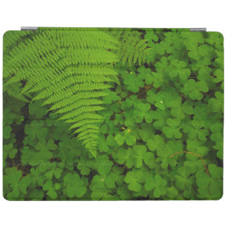 Humboldt Redwoods State Park iPad Smart Cover