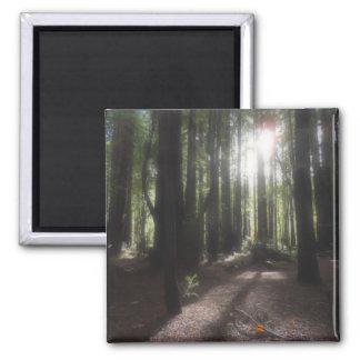 Humboldt Redwoods State Park 2 Inch Square Magnet