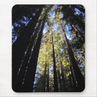 Humboldt Redwoods State Park Mouse Pad