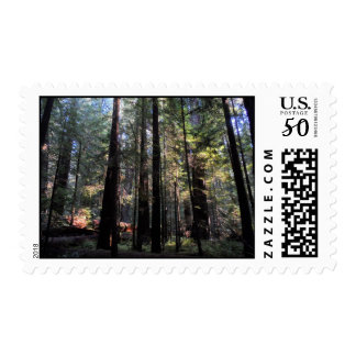 Humboldt Redwoods State Park Postage