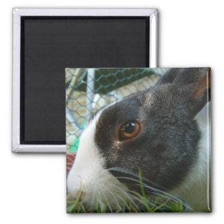 Humbug 2 Inch Square Magnet