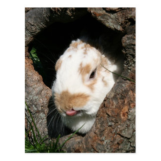 Humbug bunny postcard