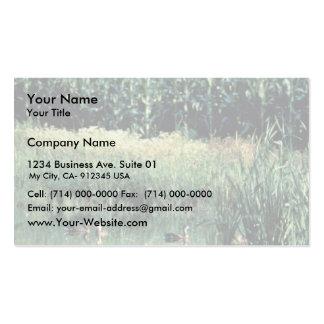 Humedal, agujero tarjetas de visita