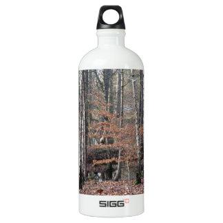 Humedal del bosque de Delamere