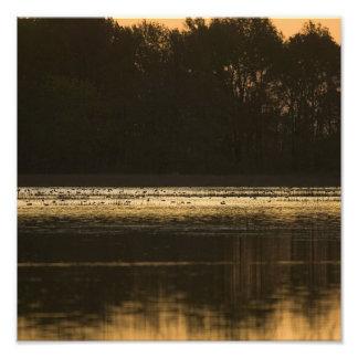 Humedal en la puesta del sol en silueta impresiones fotográficas