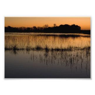 Humedal en la puesta del sol arte con fotos