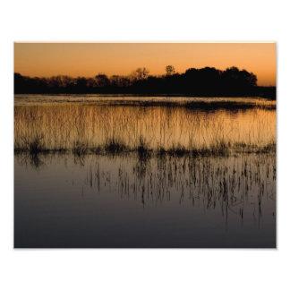 Humedal en la puesta del sol cojinete