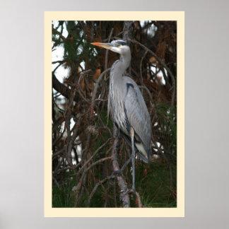 Humedales de los animales de la fauna del pájaro póster