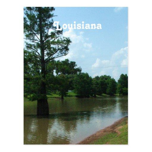 Humedales de Luisiana Tarjetas Postales