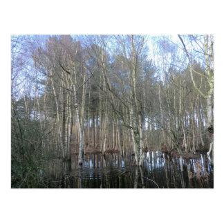 Humedales en el bosque de Delamere Tarjeta Postal