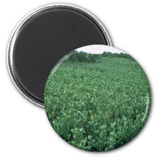Humedales pantano del mangle negro iman de frigorífico