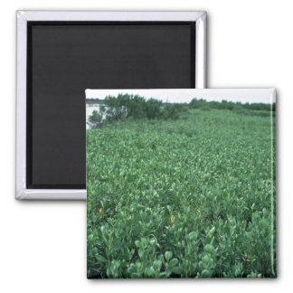 Humedales pantano del mangle negro imán para frigorifico