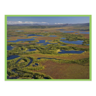 Humedales (superiores) del río de Kanuti Tarjeta Postal