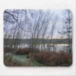 Humedales y musgo de Blakemere en el bosque de Del Alfombrilla De Ratones