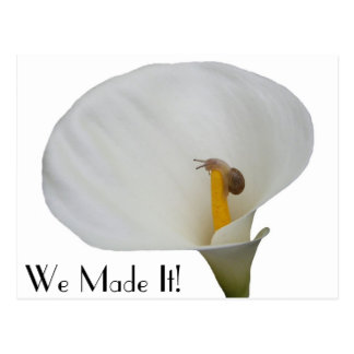 Humerous Snail on Lily Postcard