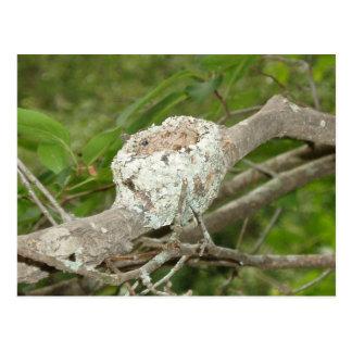 Hummer Nest Postcard