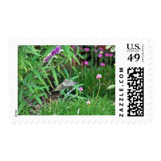 Hummer Postage Stamps