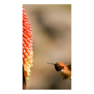 Humminbird and Red Hot Poker Flower Business Cards