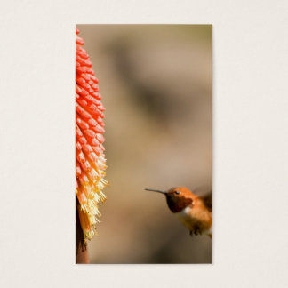 Humminbird and Red  Hot Poker Flower Business Card