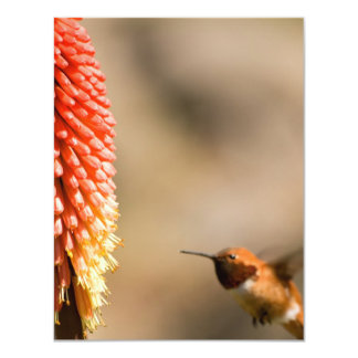 Humminbird and Red  Hot Poker Flower Card