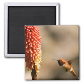 Humminbird and Red  Hot Poker Flower Magnets