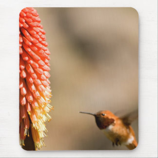 Humminbird and Red  Hot Poker Flower Mouse Pad