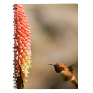 Humminbird and Red Hot Poker Flower Note Book