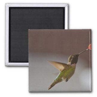 Humminbird Magnet