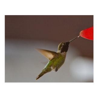 Humminbird Postal