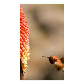 Humminbird y flor del póker candente tarjetas personales
