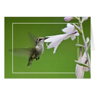 Hummindbird y Hosta Tarjeta De Felicitación