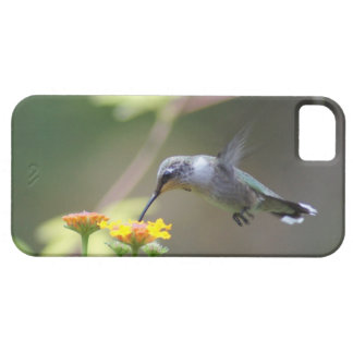 Humming Along iPhone SE/5/5s Case