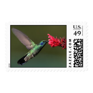 Humming Beauty Stamps