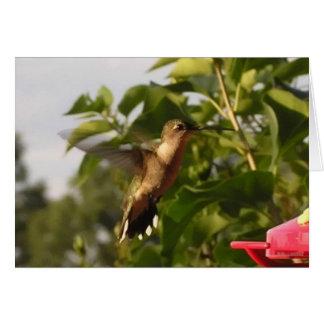 Humming Bird 1 Card
