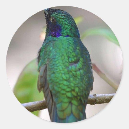 humming-bird 8x10 classic round sticker