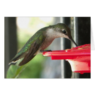 Humming Bird at Feeder Photograph Blank Card