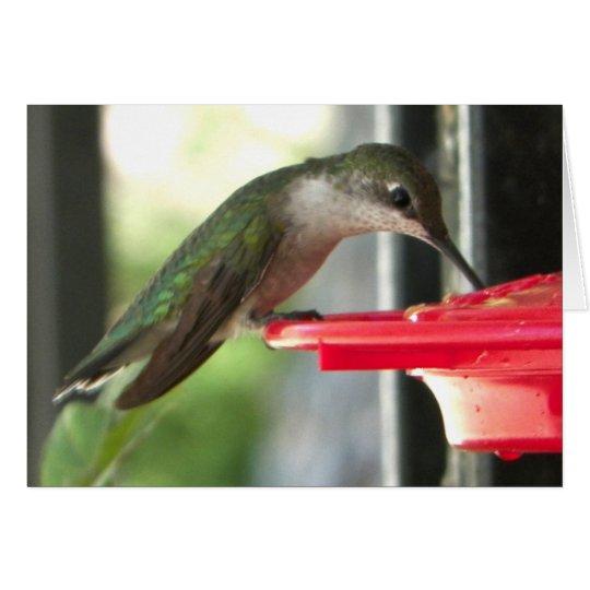 Humming Bird at Feeder Photograph Blank Card