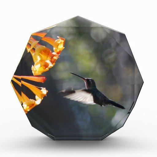 Humming Bird Awards