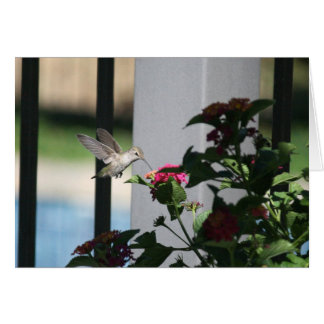 Humming Bird, Blank Card