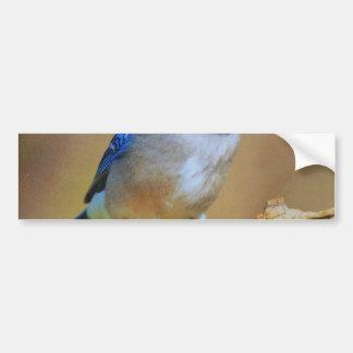 Humming Bird Bumper Sticker
