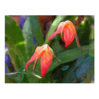 Humming Bird Flame Orchid Postcard