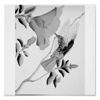 humming bird graphite poster