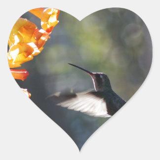 Humming Bird Heart Sticker